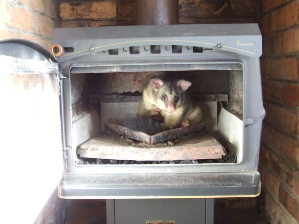 Door of the heater open showing a possum sitting inside